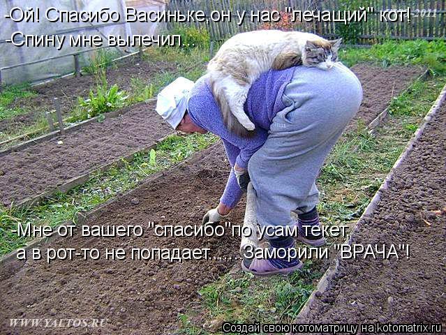 """Котоматрица: -Ой! Спасибо Васиньке,он у нас """"лечащий"""" кот! -Спину мне вылечил... -Мне от вашего """"спасибо""""по усам текет, а в рот-то не попадает....... Заморили """"ВРА"""