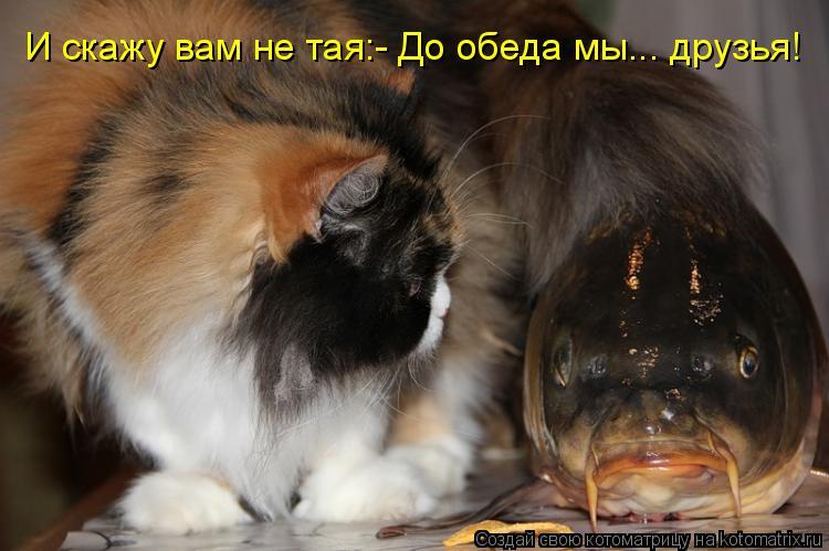 Котоматрица: И скажу вам не тая:- До обеда мы... друзья!