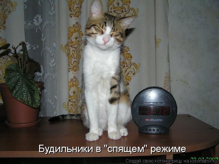 """Котоматрица: Будильники в """"спящем"""" режиме"""