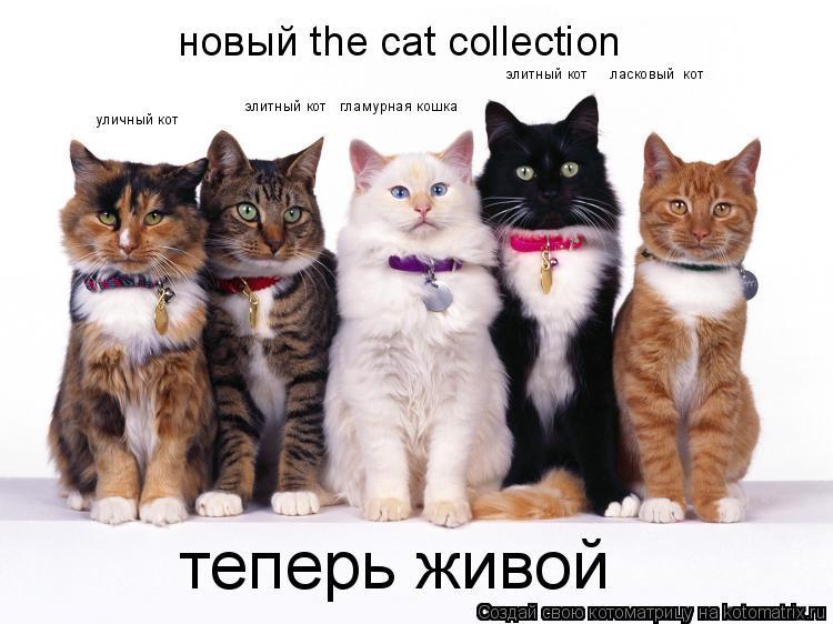 Котоматрица: элитный кот   гламурная кошка уличный кот элитный кот     ласковый  кот новый the cat collection теперь живой