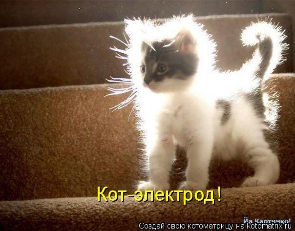 Котоматрица: Кот-электрод!