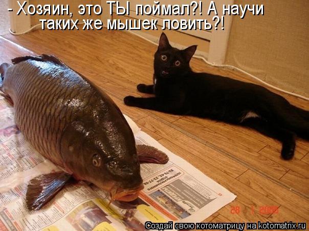 Котоматрица: - Хозяин, это ТЫ поймал?! А научи таких же мышек ловить?!