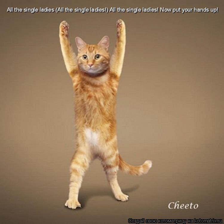 Котоматрица: All the single ladies (All the single ladies!) All the single ladies! Now put your hands up!