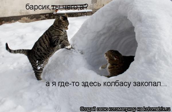Котоматрица: барсик,ты чего,а? а я где-то здесь колбасу закопал...