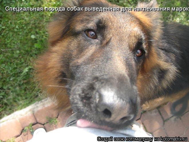 Котоматрица: Специальная порода собак выведенная для наклеивания марок!