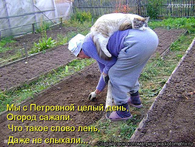 Котоматрица: Мы с Петровной целый день,  Огород сажали. Что такое слово лень, Даже не слыхали...