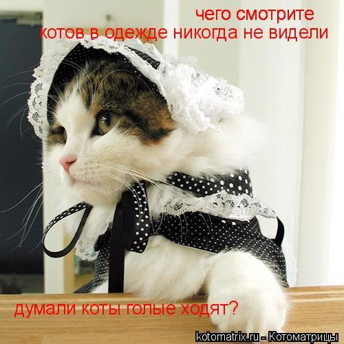 Котоматрица: чего смотрите  чего смотрите  котов в одежде никогда не видели чего смотрите  думали коты голые ходят?