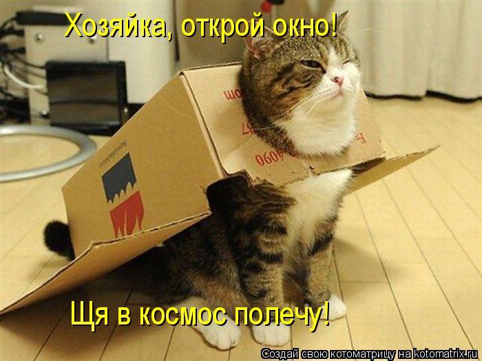 Котоматрица: Щя в космос полечу! Хозяйка, открой окно!