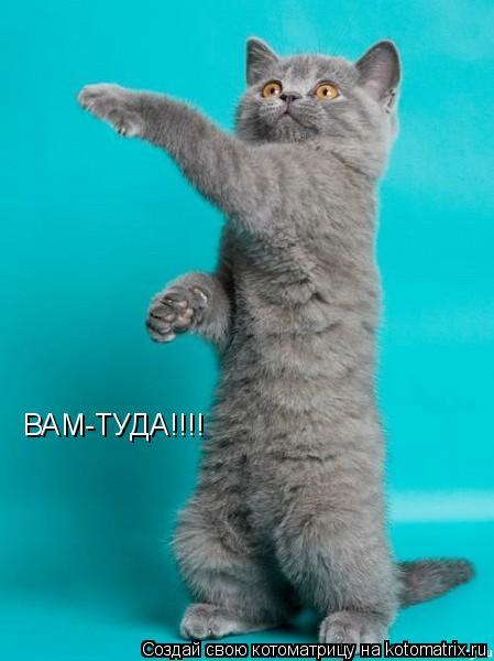 Котоматрица: ВАМ-ТУДА!!!!