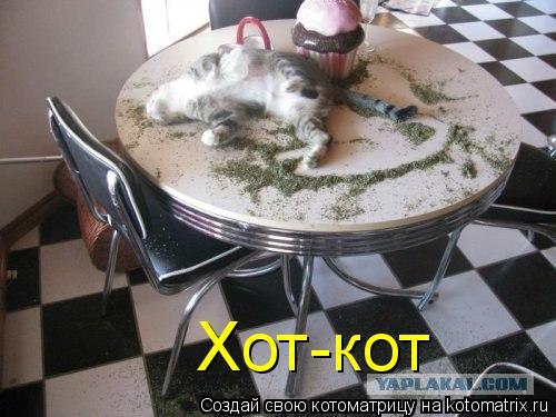 Котоматрица: Хот-кот