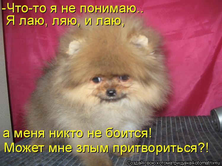 Котоматрица: -Что-то я не понимаю.. Я лаю, ляю, и лаю, а меня никто не боится! Может мне злым притвориться?!