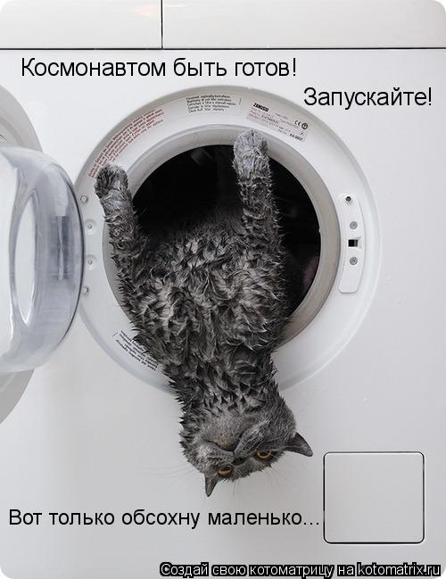 Котоматрица: Космонавтом быть готов! Запускайте! Вот только обсохну маленько...