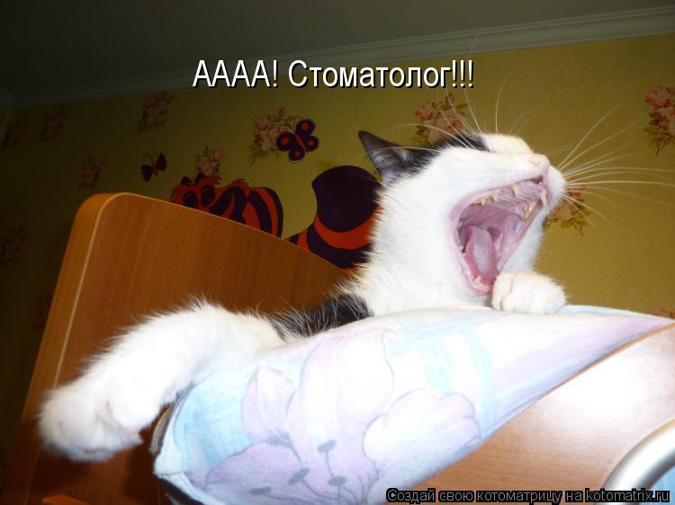 Котоматрица: АААА! Стоматолог!!!