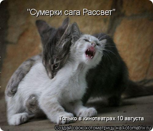 """Котоматрица: """"Сумерки сага Рассвет"""" Только в кинотеатрах 10 августа"""