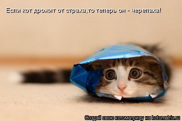 Котоматрица: Если кот дрожит от страха,то теперь он - черепаха!