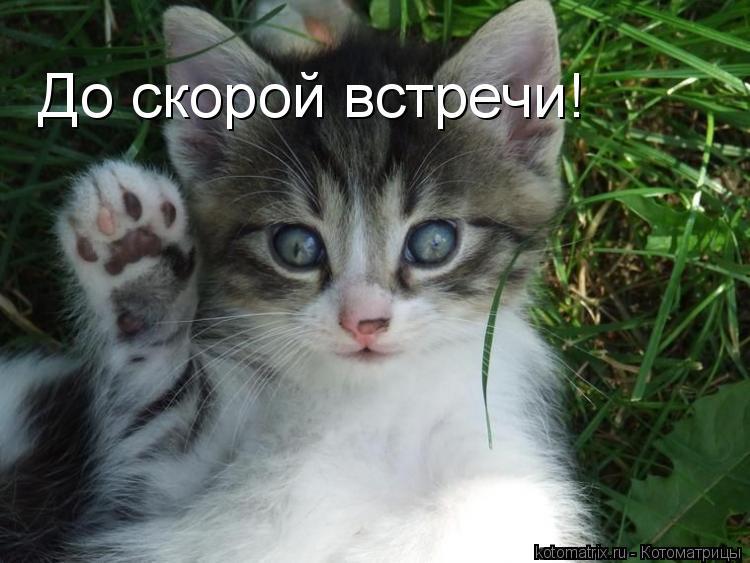 Котоматрица: До скорой встречи!