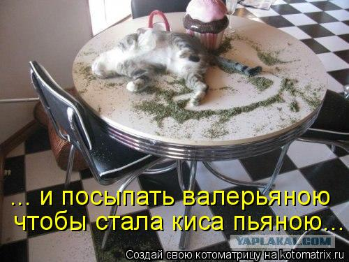 Котоматрица: ... и посыпать валерьяною чтобы стала киса пьяною...