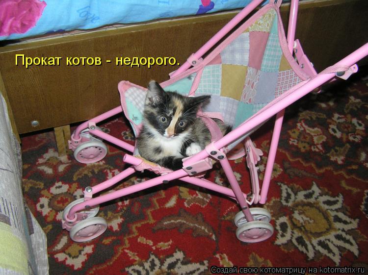 Котоматрица: Прокат котов - недорого.