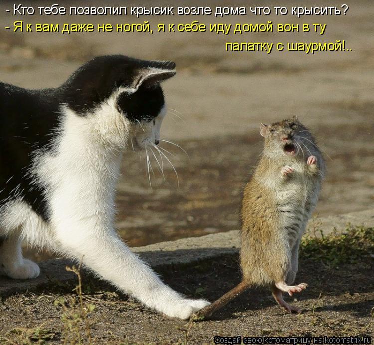 Котоматрица: - Кто тебе позволил крысик возле дома что то крысить? - Я к вам даже не ногой, я к себе иду домой вон в ту палатку с шаурмой!..