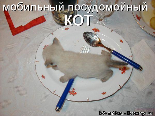 Котоматрица: мобильный посудомойный кот