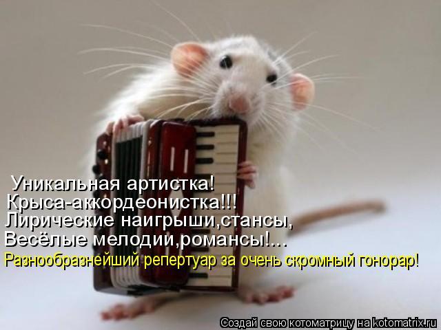 Котоматрица: Уникальная артистка! Крыса-аккордеонистка!!! Лирические наигрыши,стансы, Весёлые мелодии,романсы!... Разнообразнейший репертуар за очень ск