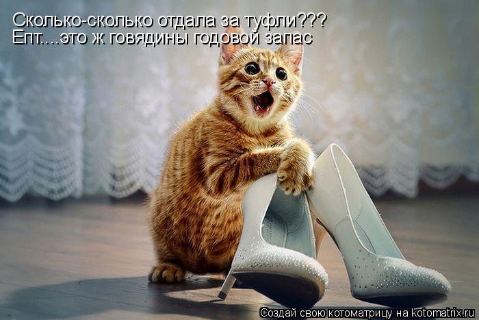 Котоматрица: Cколько-сколько отдала за туфли??? Епт....это ж говядины годовой запас