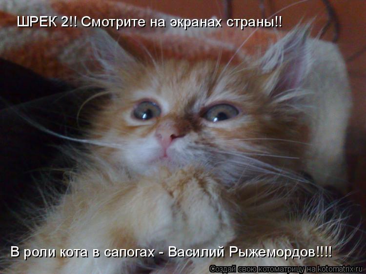 Котоматрица: ШРЕК 2!! Смотрите на экранах страны!! В роли кота в сапогах - Василий Рыжемордов!!!!