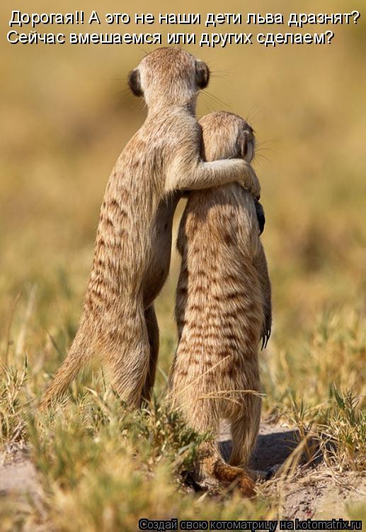 Котоматрица: Дорогая!! А это не наши дети льва дразнят? Сейчас вмешаемся или других сделаем?