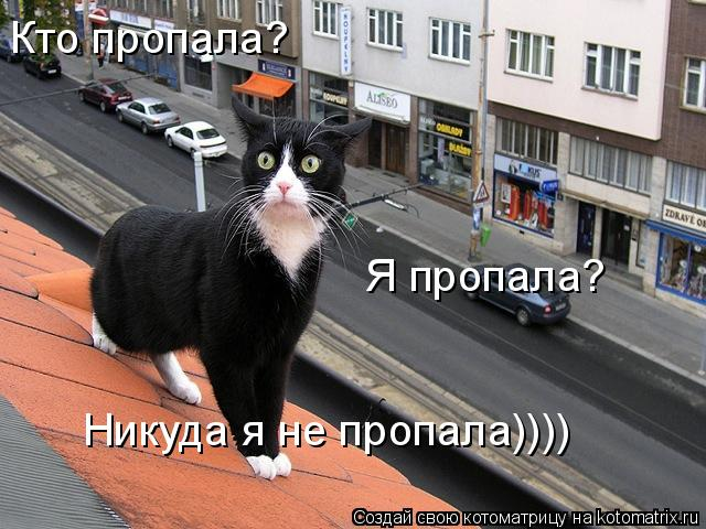 Котоматрица: Кто пропала? Я пропала? Никуда я не пропала))))