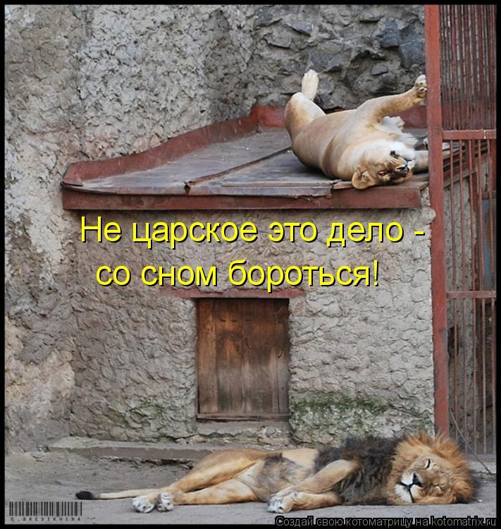 Котоматрица: Не царское это дело -  со сном бороться!