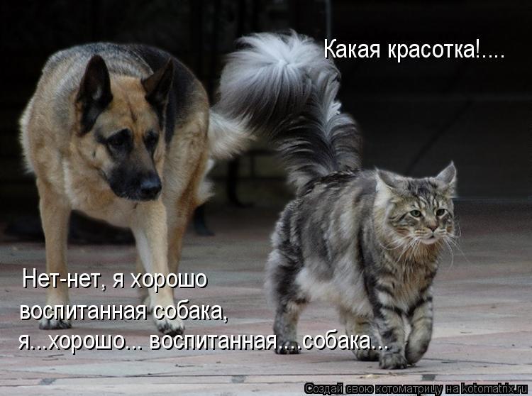 Котоматрица: Какая красотка!.... Нет-нет, я хорошо  воспитанная собака,  я...хорошо... воспитанная....собака...