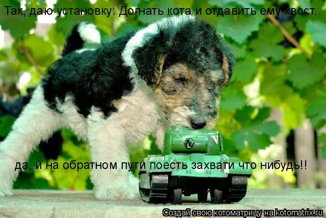 Котоматрица: Так, даю установку: Догнать кота и отдавить ему хвост.. да, и на обратном пути поесть захвати что нибудь!!