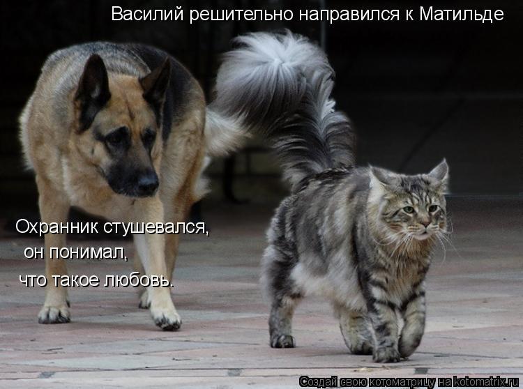 Котоматрица: Василий решительно направился к Матильде Охранник стушевался, он понимал, что такое любовь.