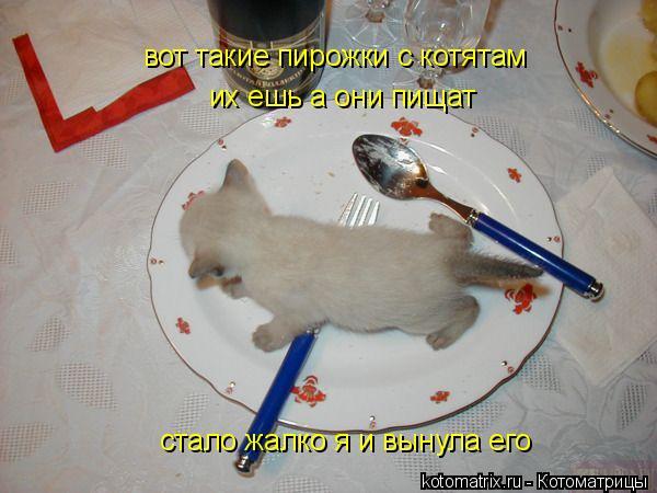 Котоматрица: вот такие пирожки с котятам их ешь а они пищат стало жалко я и вынула его