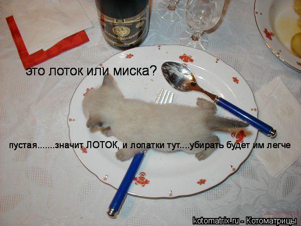 Котоматрица: это лоток или миска? это лоток или миска? это лоток или миска? пустая.......значит ЛОТОК, и лопатки тут....убирать будет им легче пустая.......значи