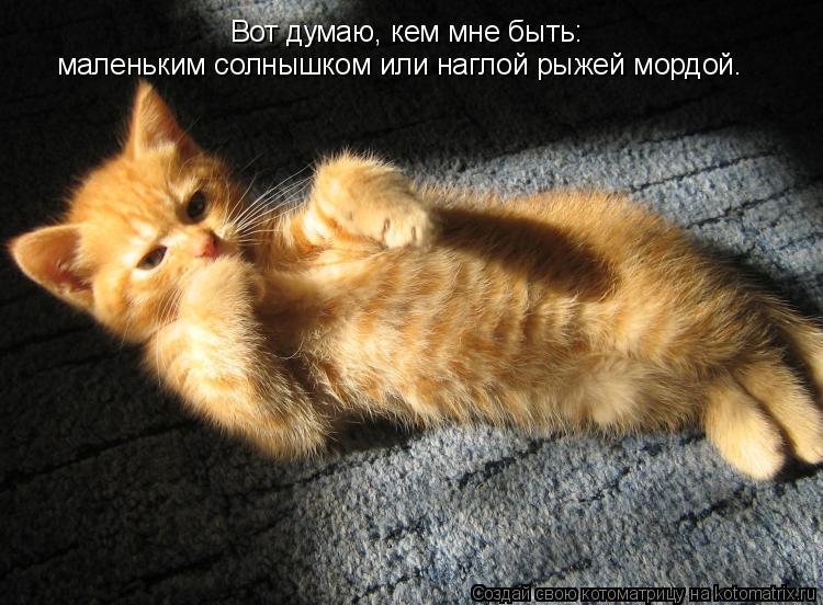 Котоматрица: Вот думаю, кем мне быть: маленьким солнышком или наглой рыжей мордой.