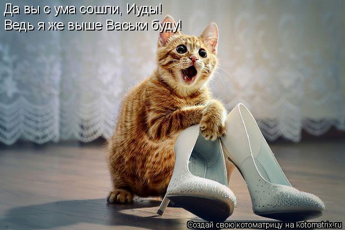 Котоматрица: Да вы с ума сошли, Иуды! Ведь я же выше Васьки буду!