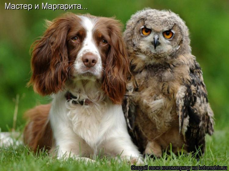 Котоматрица: Мастер и Маргарита...