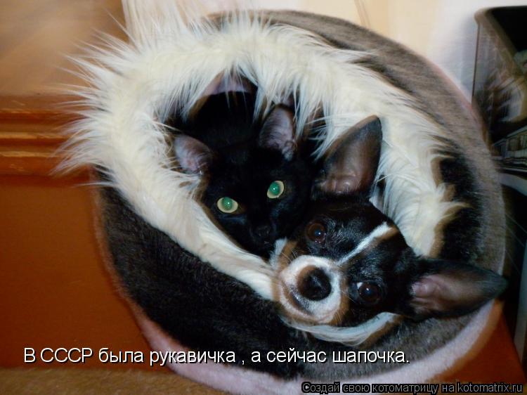 Котоматрица: В СССР была рукавичка , а сейчас шапочка.