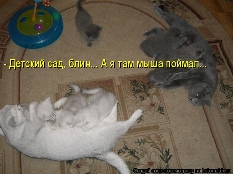 Котоматрица: - Детский сад, блин... А я там мыша поймал...