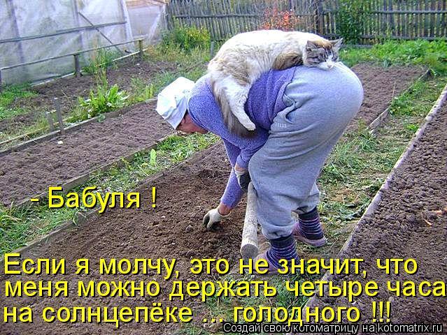 Котоматрица: - Бабуля ! на солнцепёке ... голодного !!! меня можно держать четыре часа Если я молчу, это не значит, что