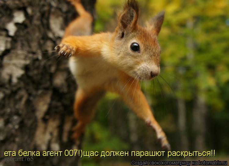 Котоматрица: ета белка агент 007!)щас должен парашют раскрыться!!