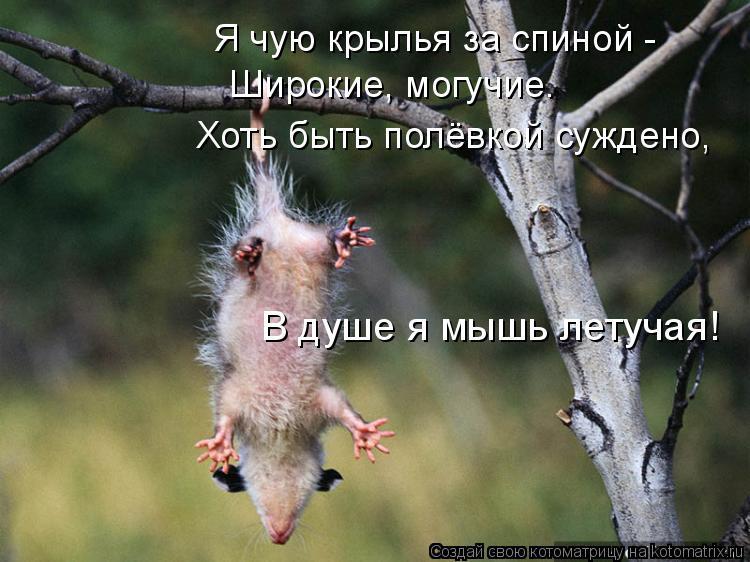 Котоматрица: Я чую крылья за спиной -  Широкие, могучие. Хоть быть полёвкой суждено,  В душе я мышь летучая!