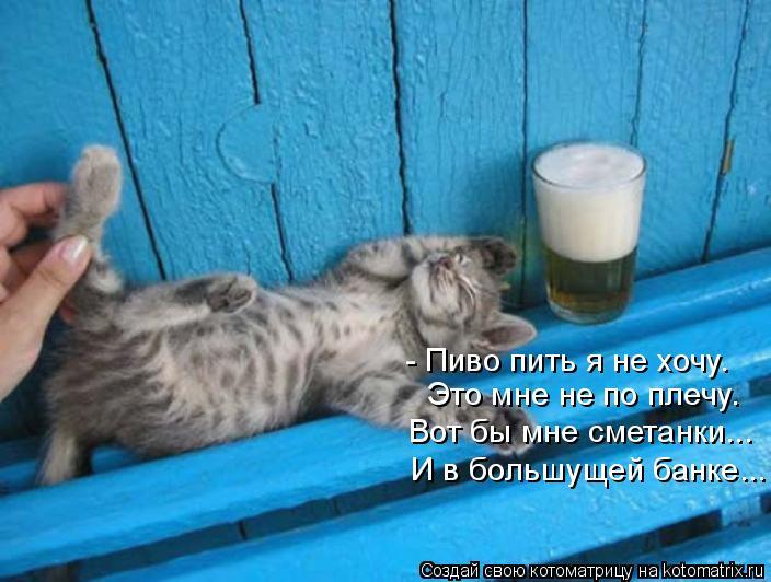 Котоматрица - - Пиво пить я не хочу. Это мне не по плечу. Вот бы мне сметанки... И в