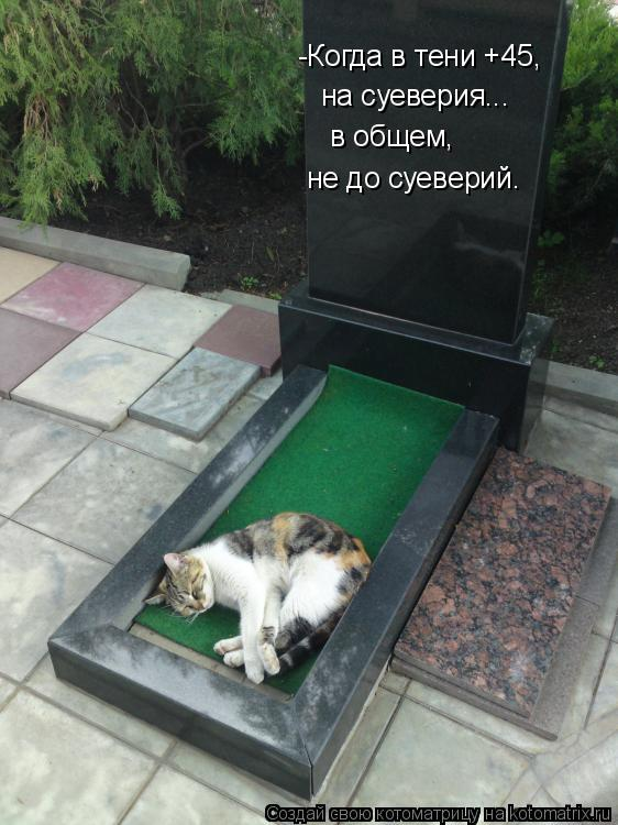 Котоматрица: -Когда в тени +45,   на суеверия... в общем,  не до суеверий.