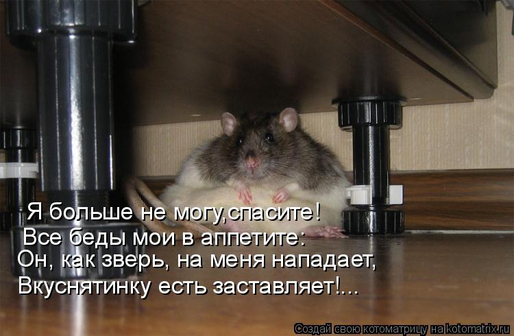 Котоматрица: Я больше не могу,спасите! Все беды мои в аппетите: Он, как зверь, на меня нападает, Вкуснятинку есть заставляет!...