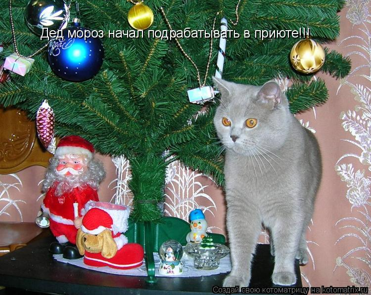 Котоматрица: Дед мороз начал подрабатывать в приюте!!!