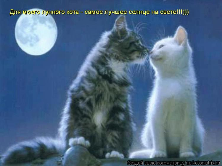 Котоматрица: Для моего лунного кота - самое лучшее солнце на свете!!!)))