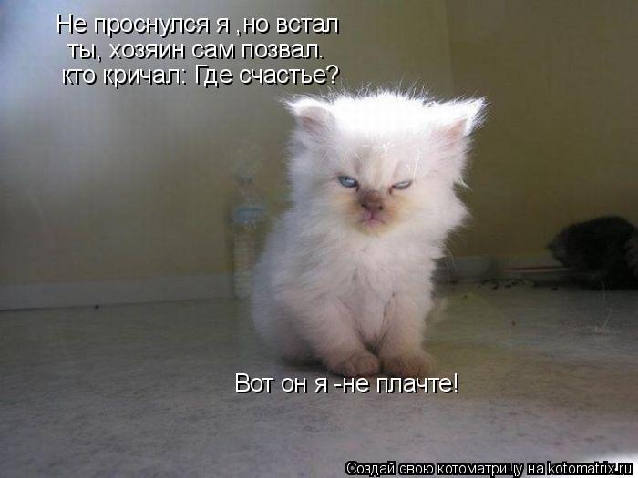Котоматрица: ты, хозяин сам позвал. кто кричал: Где счастье? Вот он я -не плачте!  Не проснулся я ,но встал