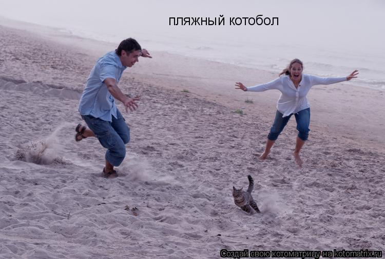 Котоматрица: пляжный котобол
